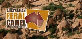 Australian Feral Camel Management Project
